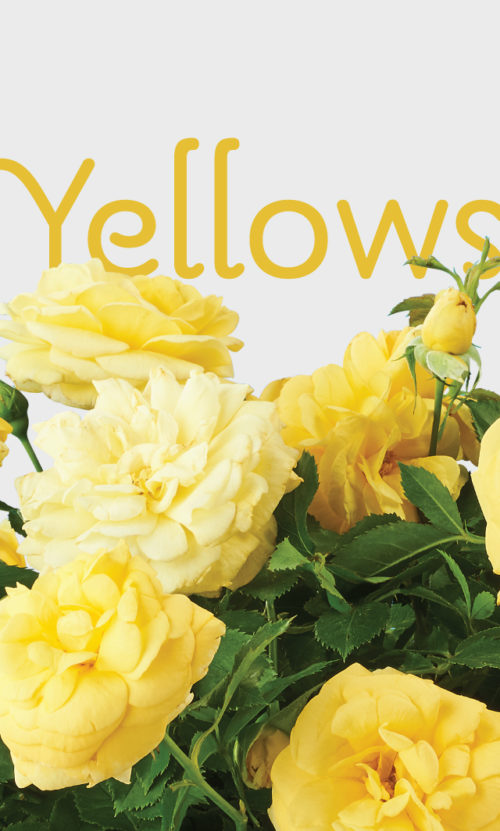2020_EE_Insets_v2Yellows_640x1064