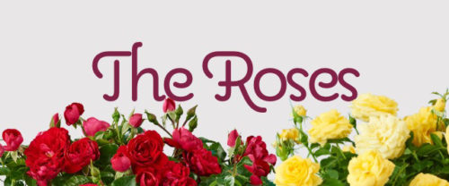 the-roses-banner-mobile
