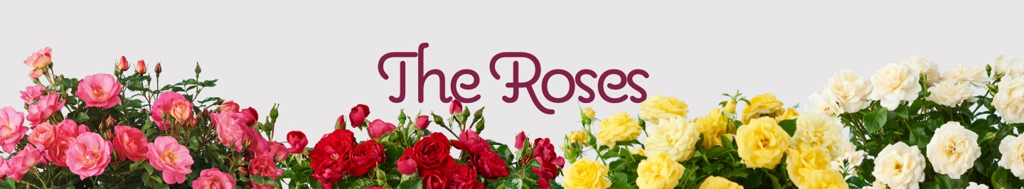 the-roses-banner